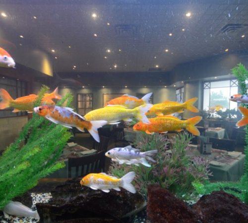 London-FishTank